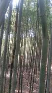 [전남 담양 여행] 대나무골 테마공원 ★ 미니버스우등 소형버스우등 우등버스 전문 버스25시