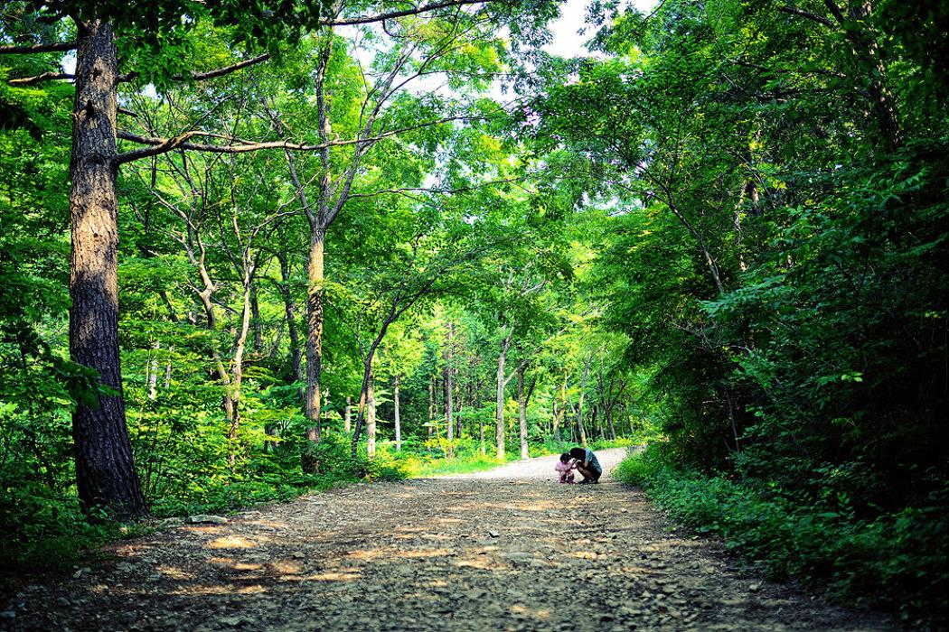 토요일의 짧은 산책170617_남해편백자연휴양림 2