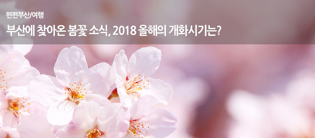 부산에 찾아온 봄꽃 소식, 2018 올해의 개화시..