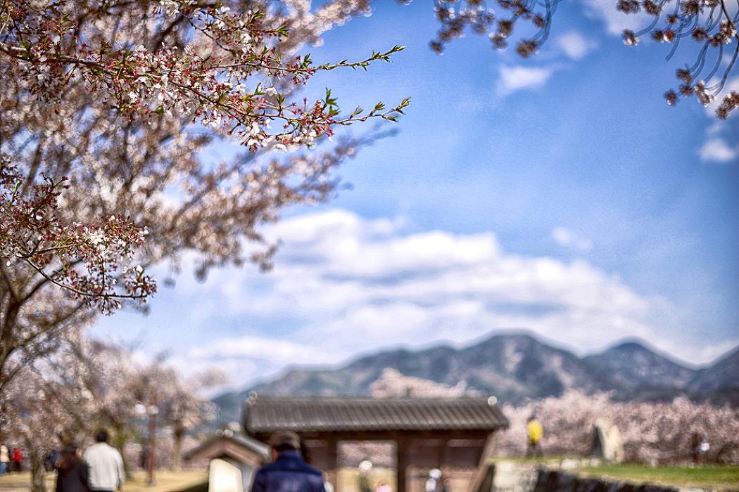 토요일의 짧은 산책180407_사천선진리성벚꽃
