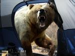 곰을 사랑한 사진작가 호시노 미치오(Michio Hoshino, 1952-1996)