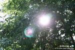 눈부신 햇살, 태양을 품은 나무에 눈이 멀다