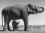코끼리는 자신이 크다는 걸 잊지 않는다.