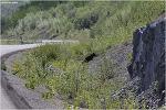 [캐나다여행] 캐나다 여행 중에 야생곰과 10번 마주치다