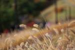 가을색으로 갈아입은 남산 | 서울 가볼만한곳, 서울 단풍명소