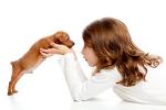 개에 관한 재미있는 사실 10가지