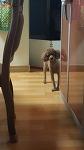 강아지 애교(강아지 키우기)