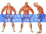 건강의 바로미터 근육! - 알면 깜놀라는 근육의 역할