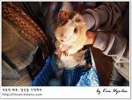[적묘의 페루]기니피그를 손질하는 시에라 여인, 안데스 전통음식 꾸이~Cavia porcellus