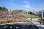 도쿄 여행, 도쿄 벚꽃, 롯폰기 힐즈, 도쿄 미드타운