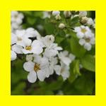 호암미술관 벚꽃축제 관람후기