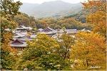 이 아름다운 가을에 방문한 송광사(松廣寺) 탐방기