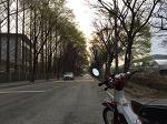 올드바이크 DH88 하오개로 벚꽃, 언더본, 숲터널