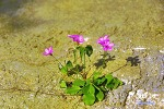 시멘트 길바닥에 꽃피운 생명력
