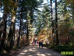 강원도 평창 전나무 숲길 따라 걷는 가을 산책 <오대산 월정사>