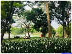 하노이 호안끼엠 호수 (Hoan Kiem)