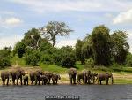 광활한 자연이 공존하는 아프리카 '짐바브웨'