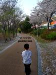 벚꽃 흩날리며 킥보드타는 아들을 보며, 봄바람 부는 아빠!