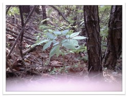 산원초 산삼감정 기준표