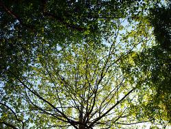 나무의 시샘