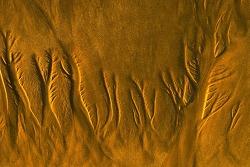 모래 숲(a forest made of sands)