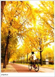 가을의 뒷모습 via iPhone 4