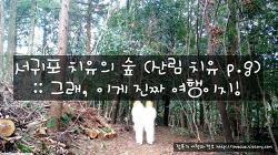 서귀포 치유의 숲 (산림 치유 프로그램) :: 그래, 이게 진짜 여행이지!