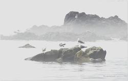 몽환적인 바다풍경