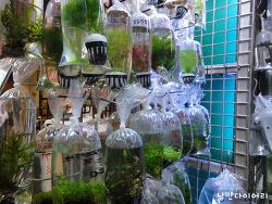 홍콩 금붕어마켓; 홍콩의 이색적인 풍경