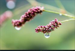 빗물을 머금은 꽃들