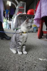 타이베이 근교 고양이 마을 허우통에서 만난 고양이들