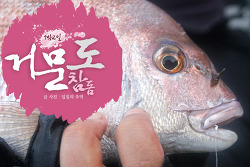 거문도 참돔 낚시(3), 바다의 미녀 참돔을 만나다