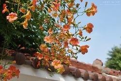 여름의 꽃