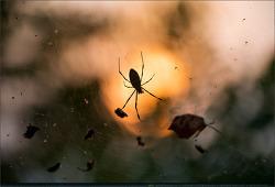 동물 - 23 (거미)