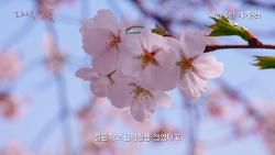[04.06] 다시, 벚꽃_예고편