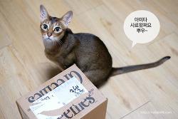 고양이들의 사료 시식회