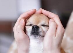 강아지 마사지 방법 마스터하기