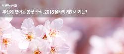 부산에 찾아온 봄꽃 소식, 2018 올해의 개화시기는?