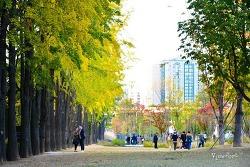 경의선 숲길 연트럴파크에 내려앉은 가을을 만나다-홍대입구 경의선숲길,서울 단풍