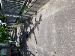 점심시간 길고양이들이 도로점령