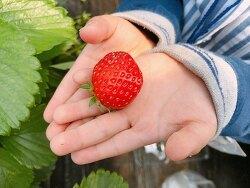 [2018.04.12] 딸기농장체험