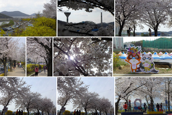 [탐사43]충훈벚꽃축제 & 석수3동(1)(2014.03.29)