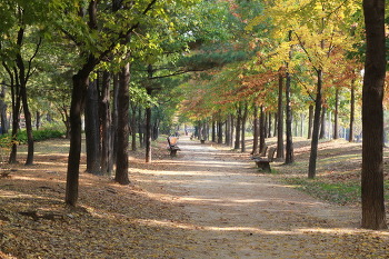 2012 가을 서울숲