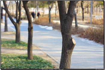 [a55] 2012.1.6 서울숲