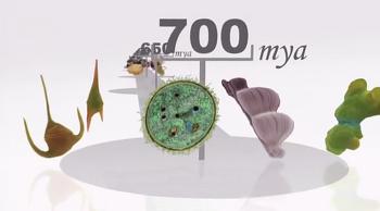 진화, 생존을 위한 변화 - 크기(Size)