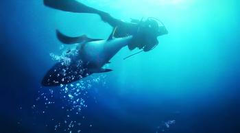 슈퍼피쉬, 인간과 물고기의 대서사시