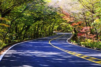 제주도 가을 드라이브코스로 이만한 곳 없어... 5.16도로의 숲터널