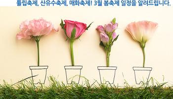 튤립축제, 산유수축제, 매화축제! 3월 봄축제 일정을 알려드립니다.