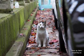 가을 고양이