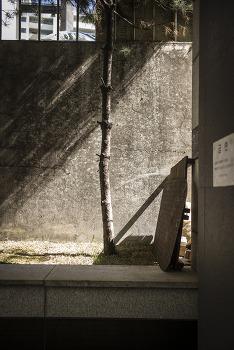 일요일 오후, 내가 동네에서 찍은 사진 보실라우. 청담동 풍경.  by 포토테라피스트 백승휴